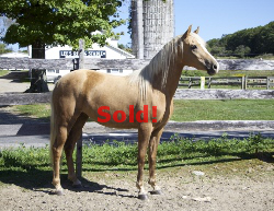 SOLD! - Windfield Juliana 2012